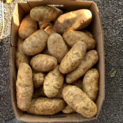 Image of 40 count baking potatoes
