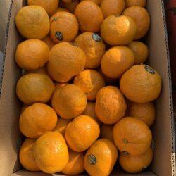 Image of Satsuma oranges