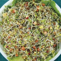Image of a bowl of Organic Spicy Salad Mix sprouts