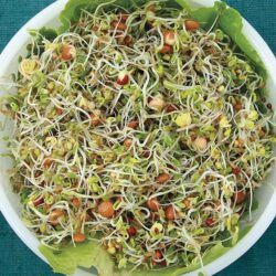 Image of a bowl of Organic Sandwich Booster Mix sprouts