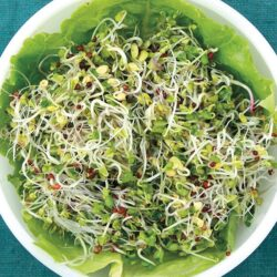 Image of a bowl of Organic Broccoli Blend sprouts