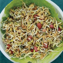 Image of a bowl of Ancient Eastern Blend sprouts