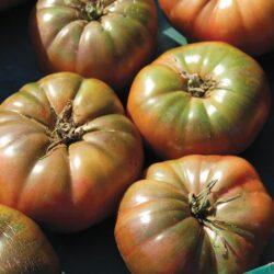 Image of ripe Cherokee Purple tomatoes