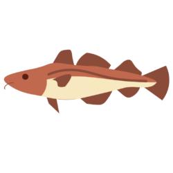 Codfish