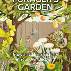 Image of the front cover of Forager's Garden, The by Anna Locke